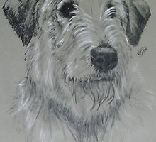 Irish Wolfhound by BarbBarcikKeith