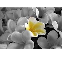 Paper Foliage Photographic Print