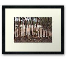 Mallet Woodland Framed Print