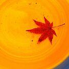 Lonley Leaf by Aaron  Cromer