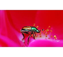 Japanese Beetle Photographic Print