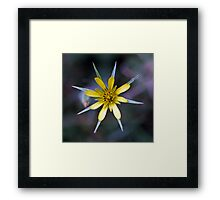Yellow flower 8 pointed petals 19720500 0014 Framed Print