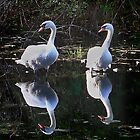 Swan Reflection by Dave Nielsen