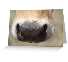 Tissue? Greeting Card