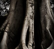 Trunk by ShotbyJessica