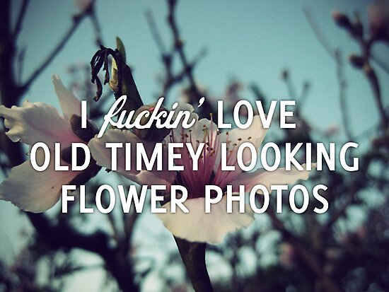 Old Timey Looking Flower Photos by ouinatalie