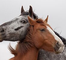 Best Friends by Gill Langridge