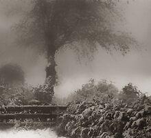 The Winter Garden by Angelika  Vogel