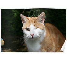 Pushkin the one eyed cat Poster