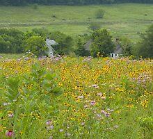 Farmstead in Summer by Michael  Dreese