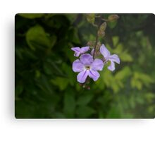 The Little Attention-Grabber Metal Print