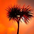 WE HAVE PALM  TREES IN SCOTLAND by leonie7