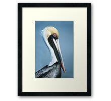Pelican Framed Print