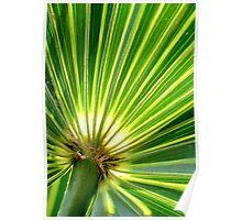 Backlit Palm leaf Poster