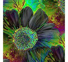 Kodachrome Floral Photographic Print