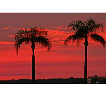 Twin Palm Delight Photographic Print