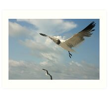 Flying Art Print