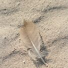 Feather in the sand by kinz4photo