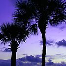 Twilight Palms by kinz4photo