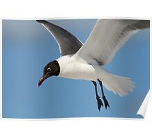 Gull Flight Poster