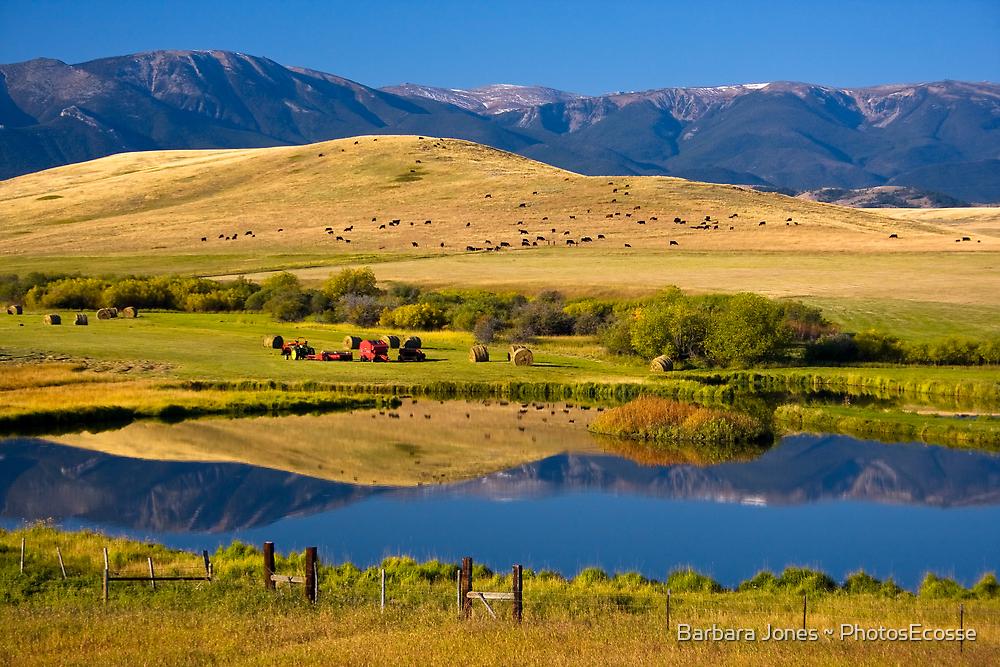 Montana Ranchland. USA. by photosecosse /barbara jones