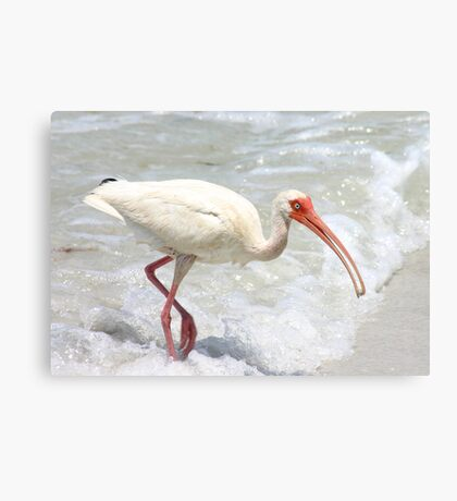 Ibis in the Surf Canvas Print