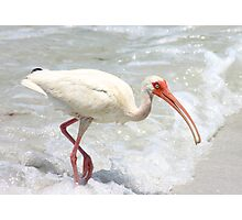 Ibis in the Surf Photographic Print