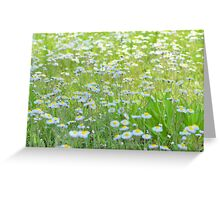Daisies Gone Wild Greeting Card