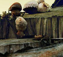 4 fungi by Antanas