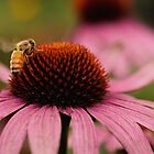 Pink Coneflower & The Bee by jenndes