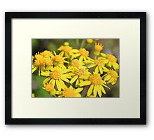 Simply Yellow Framed Print