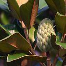 Magnolia tree close-up by barbz61