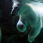 polar bear  by Michelle  Sogan