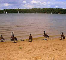 Geese Watch the Sailboats, Cowan Lake, Ohio by Debbie Meyers