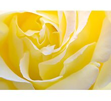 Inside Yellow Rose Photographic Print
