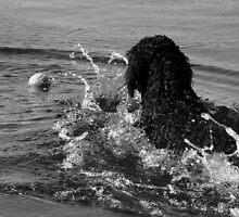 Fetch! by Ritva Ikonen
