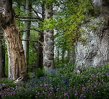 Gnarled old trees by leightoncollins