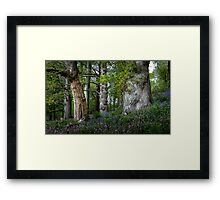 Gnarled old trees Framed Print