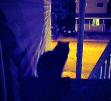 Cat at Night in the Old Neighborhood by M Sylvia Chaume