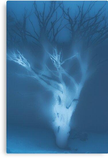 Ghost of a Tree by Tony Lin