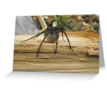 Spider and Egg Sack Greeting Card