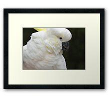 cockatoo 11 Framed Print