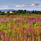 Weeds in Bloom by Nazareth