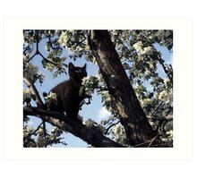 Cat In An Apple Tree Art Print