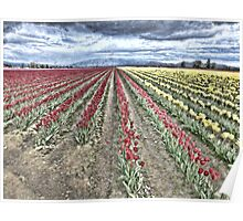 WHERE RED TULIPS MEET YELLOW Poster