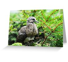 Baby Mourning Dove Greeting Card