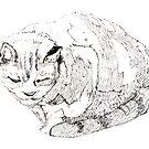 Annie's Cat by Roz McQuillan
