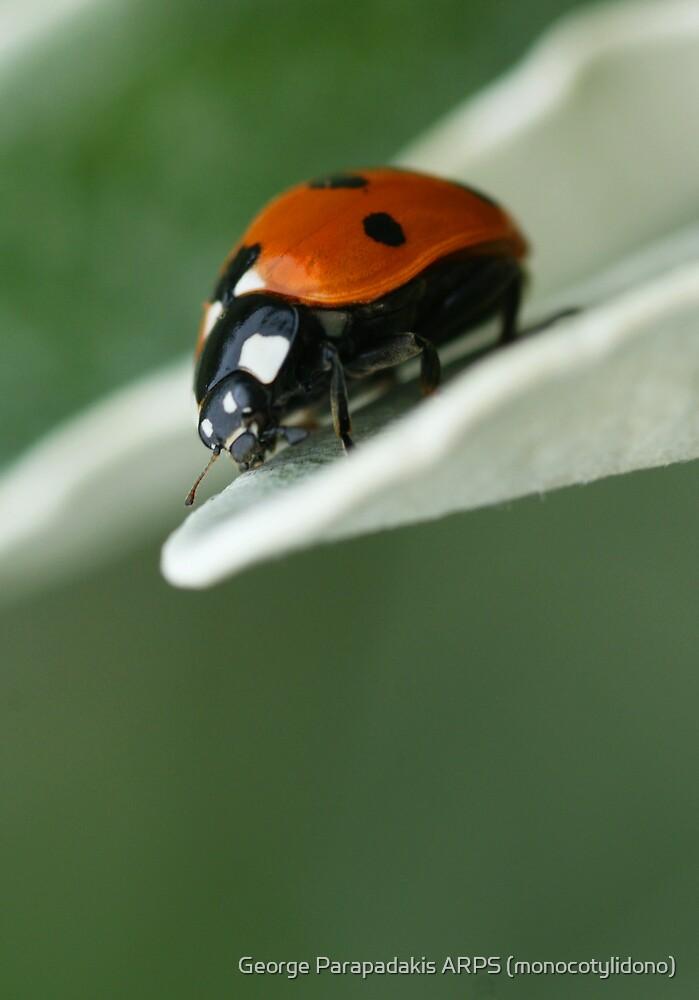 Hello there, little fella... by George Parapadakis (monocotylidono)
