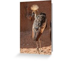 crowned crane Balearica regulorum in the farm Greeting Card
