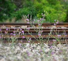 Life On Track by Kathy Nairn